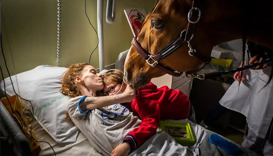 'Doctor Peyo': The Horse Comforting Cancer Patients In Calais