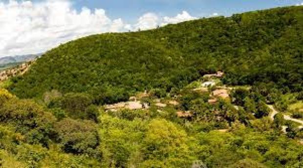 Instituto Terra: Restoring a Forest