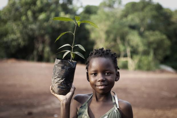 The City Planting a Million Trees in Two Years