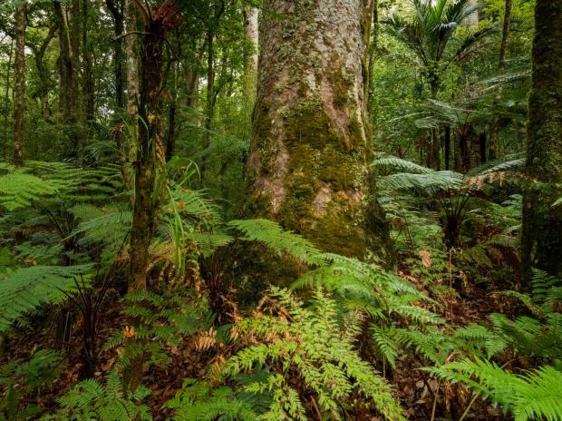 Inside the Fight to Save an Ancient Forest