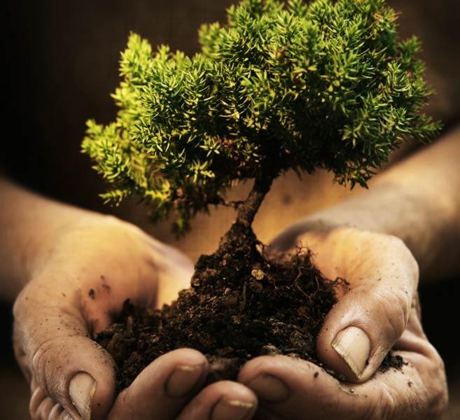 Во сне сажать маленькое дерево 12